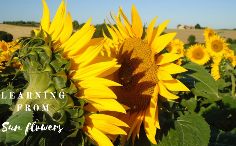 Learning from Sunflowers